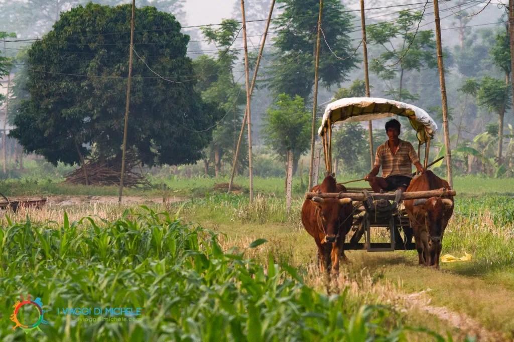 Il Risveglio a Chitwan