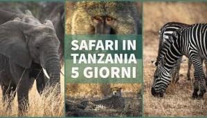 Immagine Safari