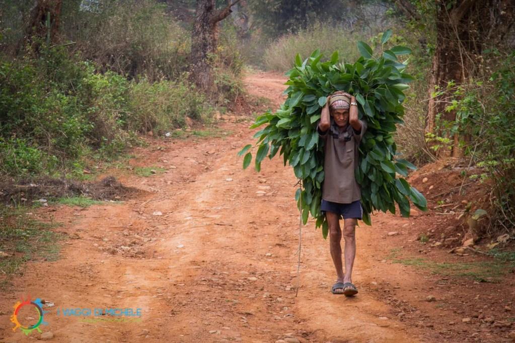 Un contadino