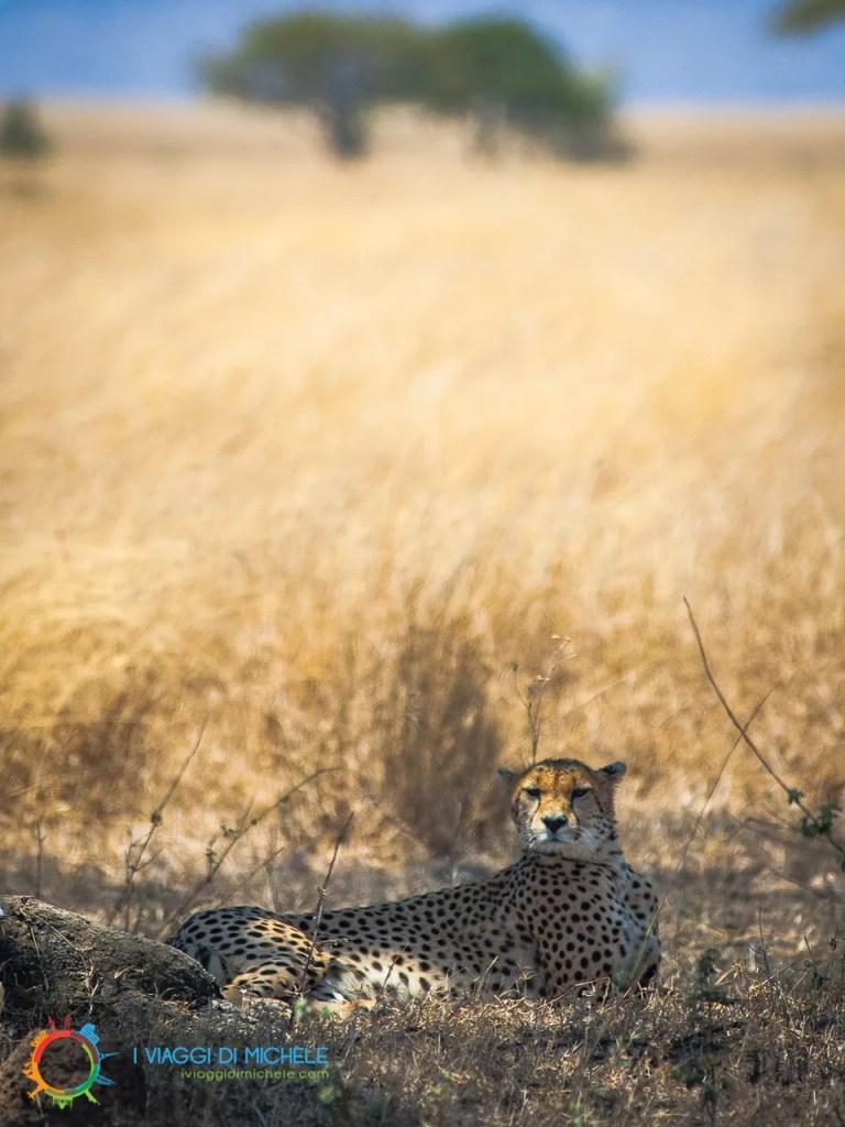 Serengeti NP - Tanzania - Destinazione Ethiopian Airlines