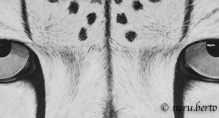 Il Cheetah Conservation Fund
