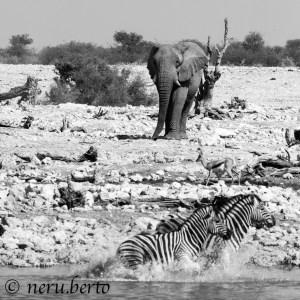 Elephantandzebras