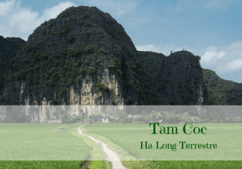 Tam Coc Ha Long Terrestre