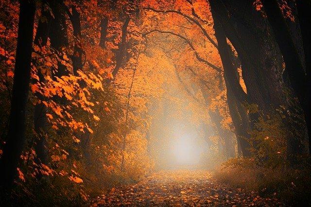 foliage bosco