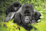 Corning Introduces Toughest Gorilla Glass Victus and Samsung will be first to Adopt
