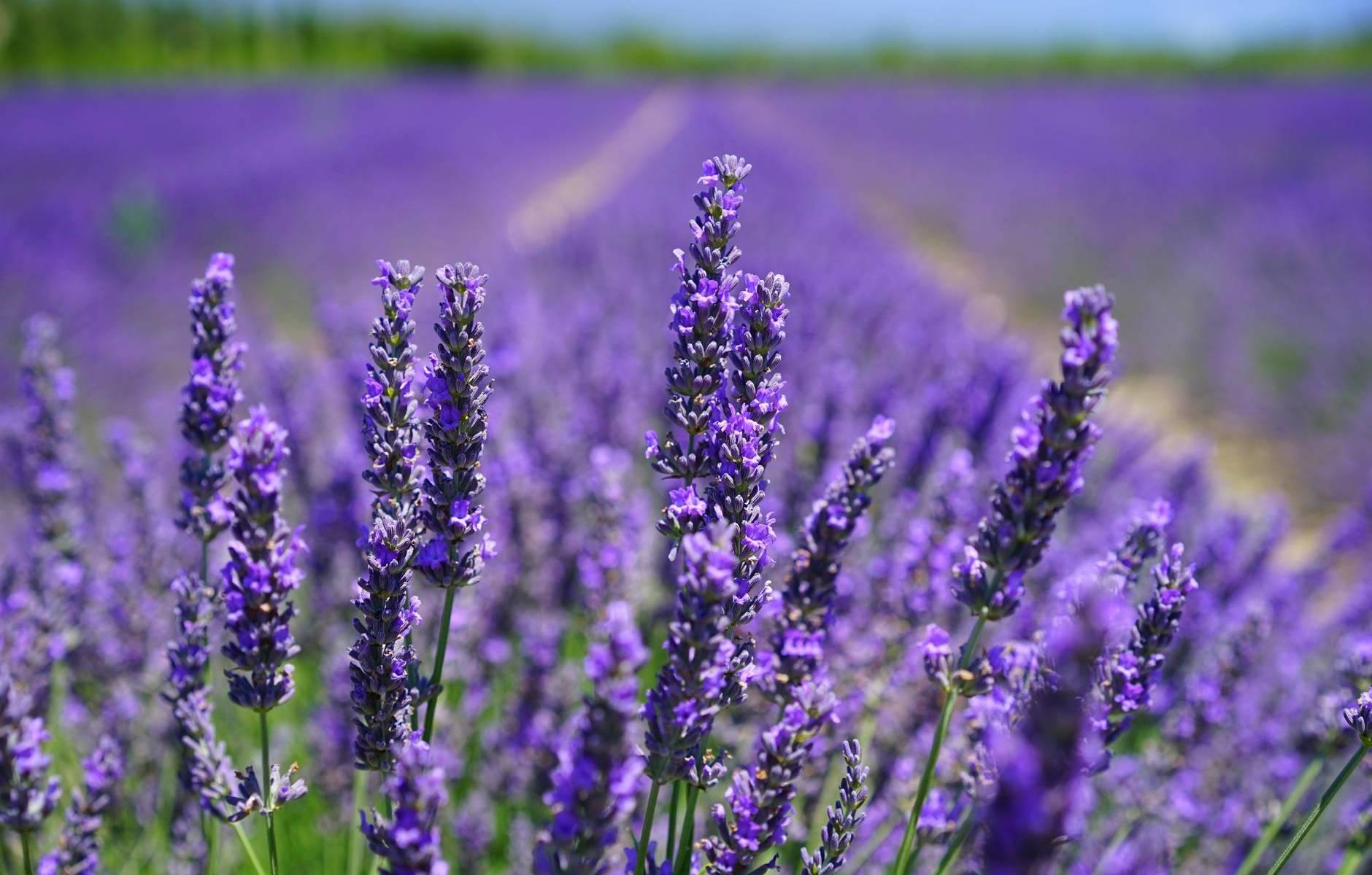 purple petal flowers focus photograph