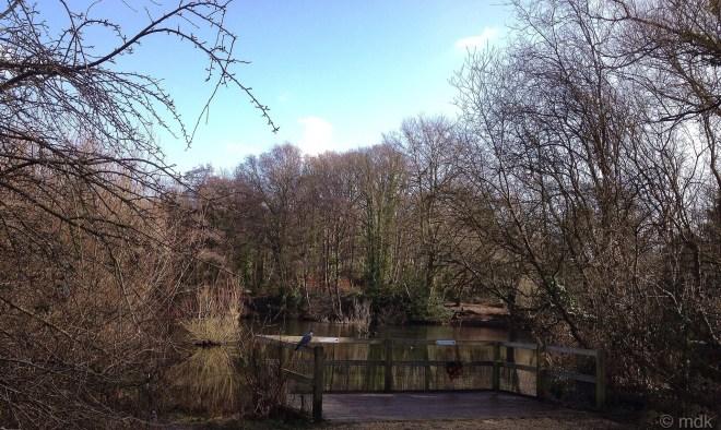 Millers Pond