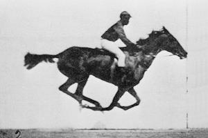 muybridge_race_horse