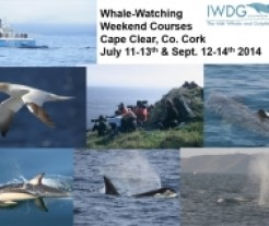 IWDG Whale Watching Weekend Courses 2013
