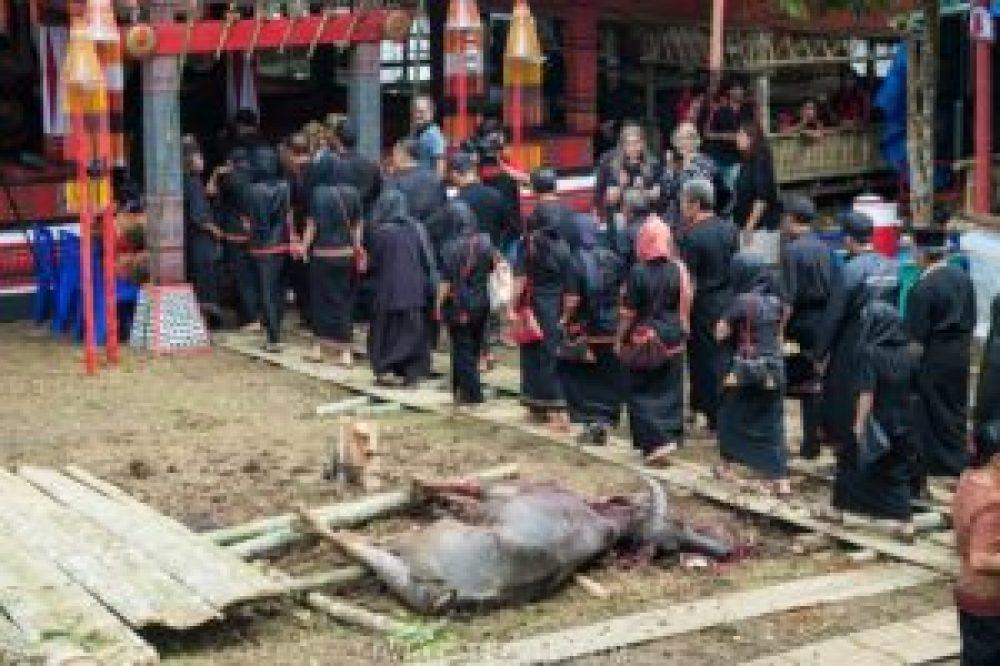 sacrifice buffle toraja mort cérémonie funéraire