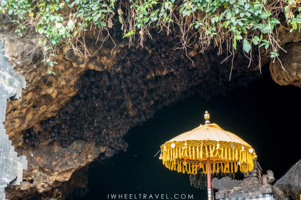 Chauves-souris, à l'entrée de la grotte du temple Goa Lawah.
