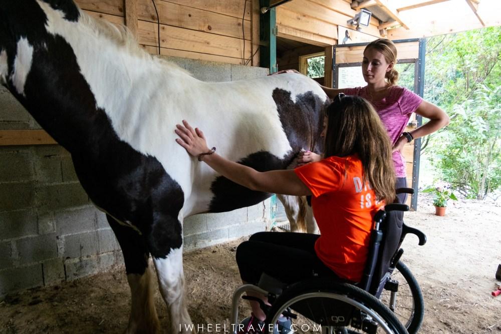 equithérapie handicap tournay