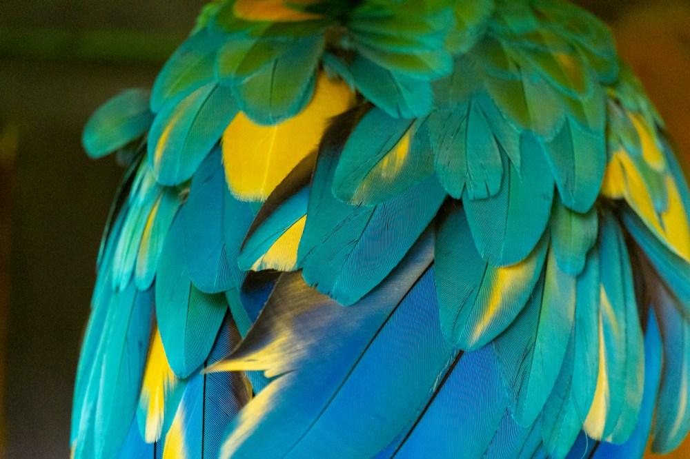guadeloupe jardin botanique perroquet