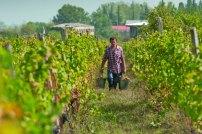 Harvest time in Georgia