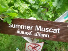 Huahin Hills Vineyards (7)