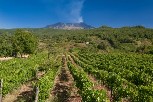 Etna wines to speak loudly at IWINETC Sicily 2017