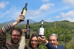 Etna Wine Tours at IWINETC Sicily