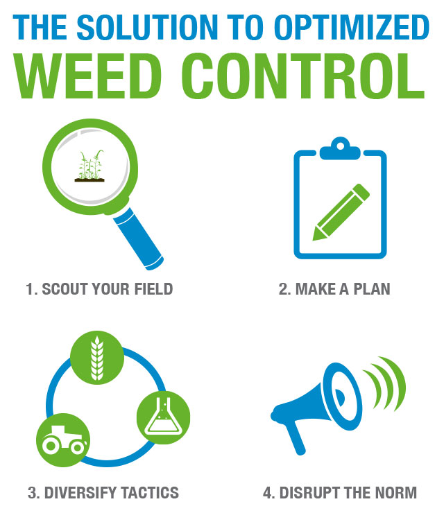 Weed Control Solution