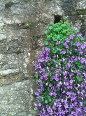Sur les murs du mois de mai - Crédit photo izart.fr