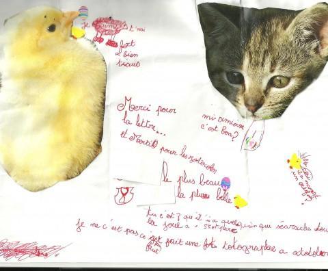 Lettre poussin et chat