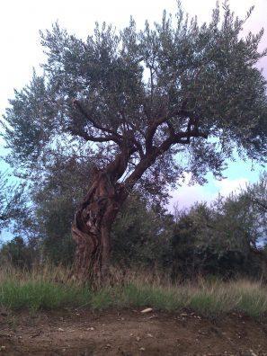 La dolce vita é qui - Crédit photo izart.fr