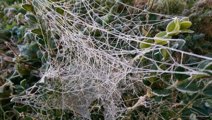 Les araignées aiment l'hiver - Crédit photo izart.fr