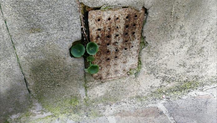 Cultiver sa vie en permaculture - Crédit photo izart.fr