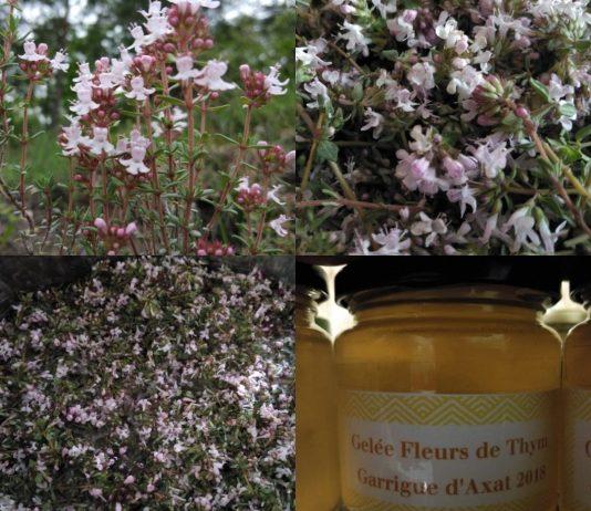 Recette N°110 - Gelée Fleurs de Thym de la Garrigue - Crédit photo izart.fr