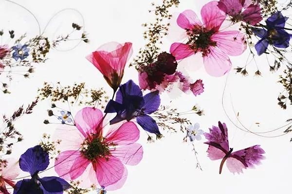Tableau Fleurs Sches Izoa
