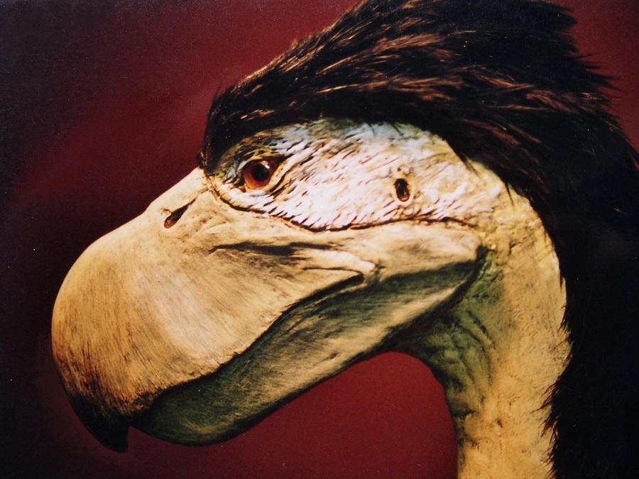 Schaalmodel Diatryma oervogel voor in pretpark, dierenpark, museum openbare ruimte