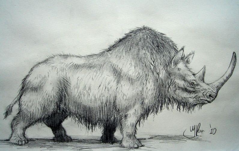 Tekening van de wolharige neushoorn. Gebruikt als illustratie in een tijdschrift over het pleistocene tijdperk. Artistieke reconstructietekening van een uitgestorven dier.