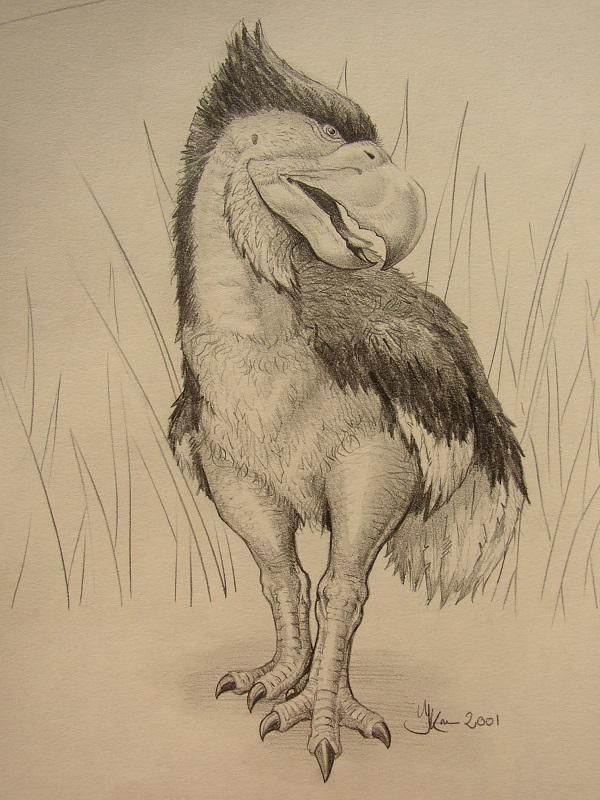 Wetenschappelijk verantwoorde tekening van de uitgestorven vogel. Paleo kunstschilder Jaap Roos heeft de gereconstrueerd in opdracht