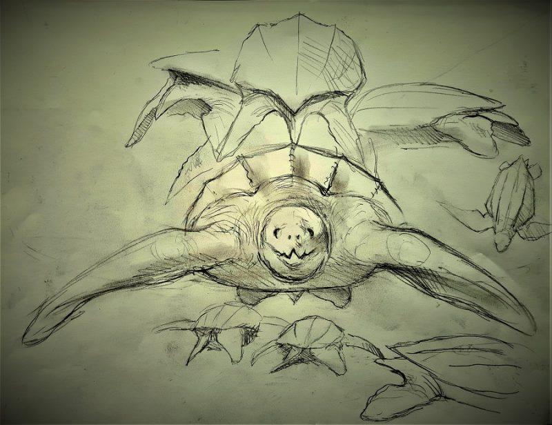 Schets ontwerp lederschildpad verschillende aanzichten voor de anatomie
