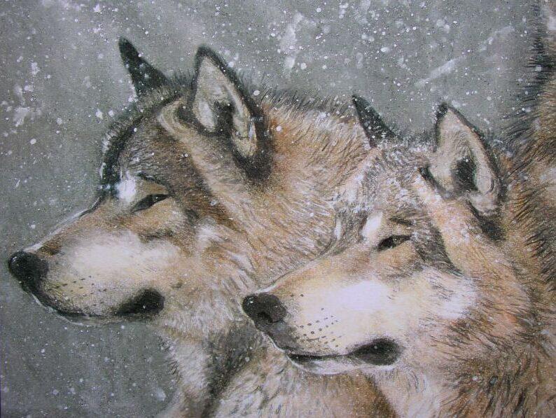 dierenschilderij gemaakt door natuurschilder Jaap Roos. Wolven in de sneeuw, het zijaanzicht.