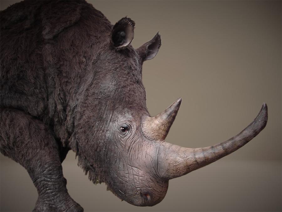 Levensgroot en realistische model, een reconstructie van de wolharige neushoorn