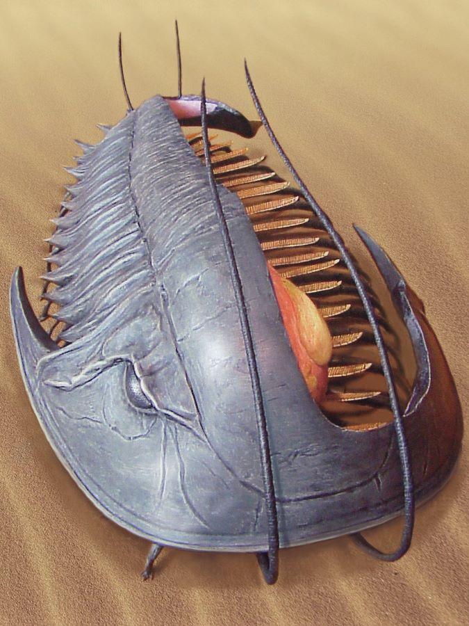 trilobite/degenkrab dwarsdoorsnede paleontologische reconstructie beeld