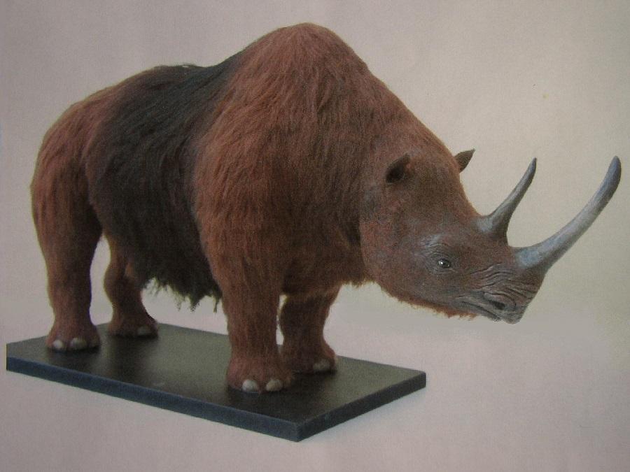 kunstobject wolharige neushoorn paleontologisch verantwoorde kunst tbv educatie centrums