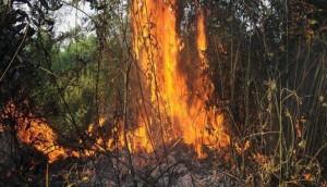 210799_kebakaran-hutan-di-riau-sebabkan-kabut-asap-_663_382