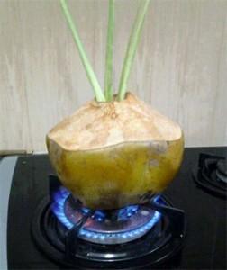 kelapa 2