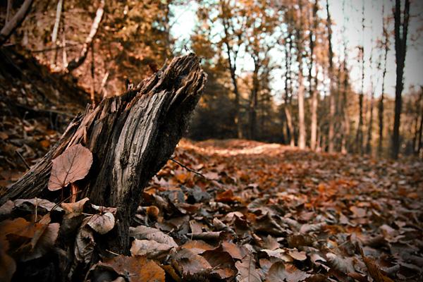 bosque otoñal