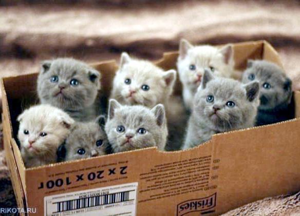 Gatitos adorables en Pinterest de Campo di fiore