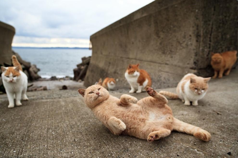 Fukoka-cielo-gatos4