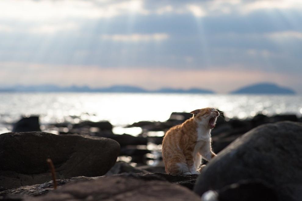 Fukoka-cielo-gatos1
