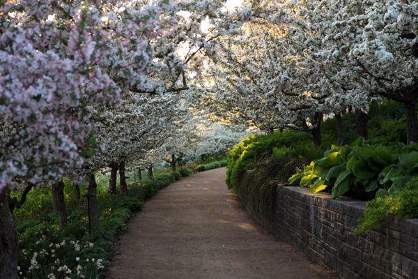Paisaje de primavera - jardín botánico