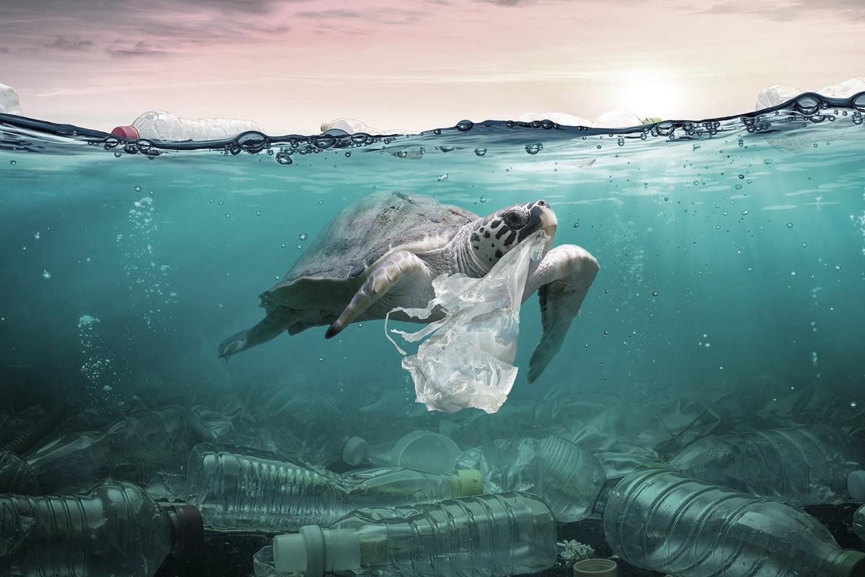 Plásticos y medioambiente