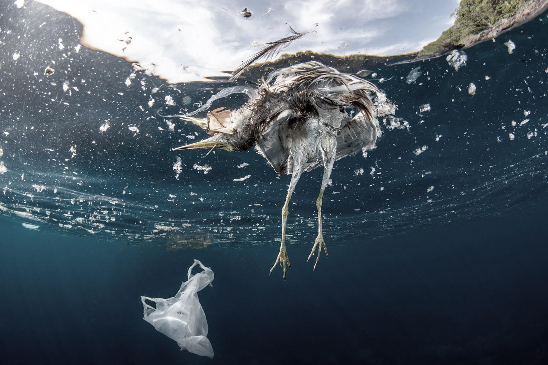 Problema de los plásticos en el medioambiente.