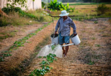Problems of Agricultural labour in India, Socio-Economic Problems of Agricultural labour in India, Government Measures to Solve Agricultural Labour problems in India