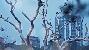 Tomar Bhetor Theke | Piya Chakraborty | Anupam Roy