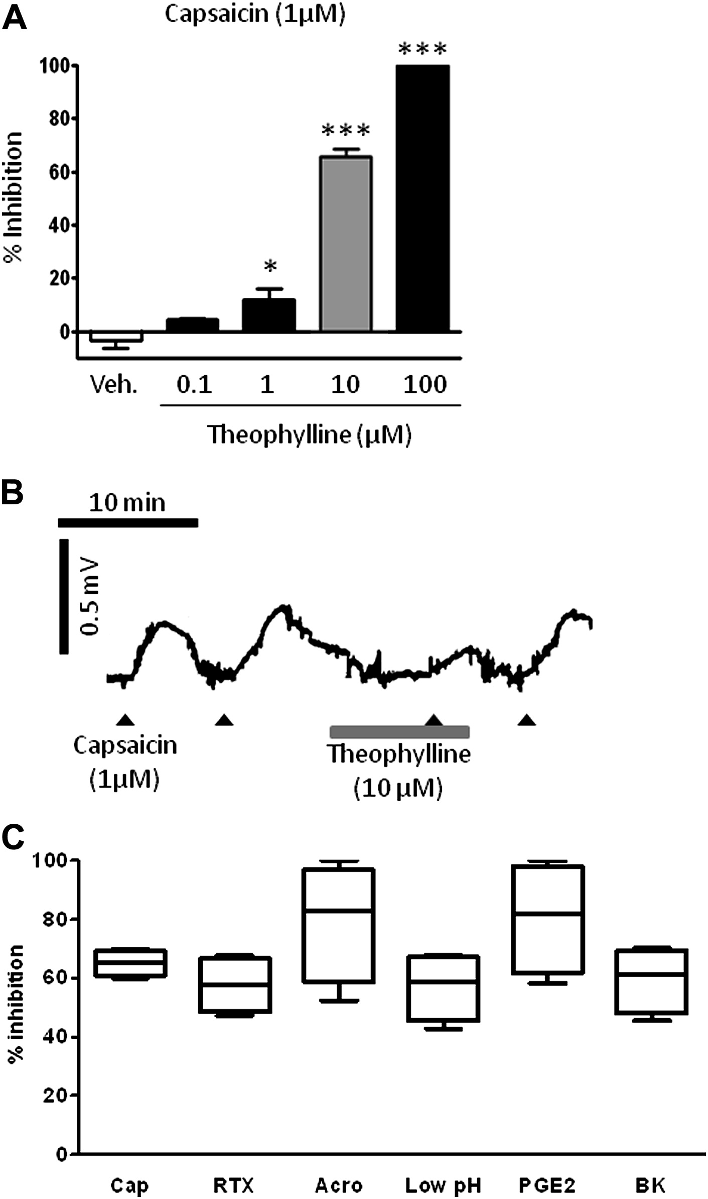 Theophylline Inhibits The Cough Reflex Through A Novel Mechanism Of Action