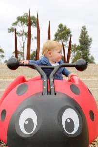 Jack's favourite - bouncy ladybeetle